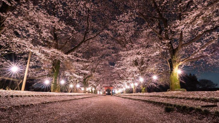 【夜桜】茨城県 東蕗田天満社【絶景スポット】